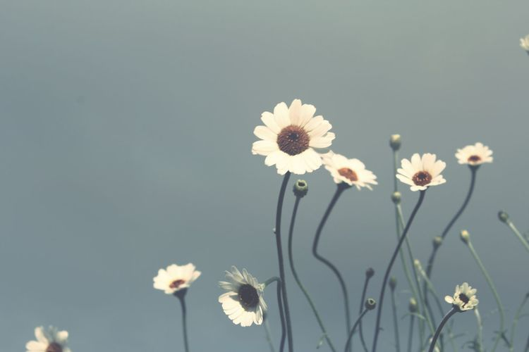 Close-up of white flowering plants against sky