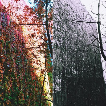 October vs November Tree Autumn Nature Thepassingoftime Change Beauty In Nature Branch Forest Day Growth Bare Tree No People Tranquility Outdoors Tranquil Scene Leaf Scenics Winter Cold Temperature Sky Autumn Autumcolors Fall October November