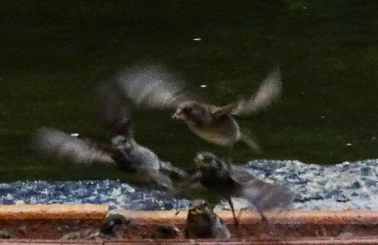 Animal Themes Animals In The Wild Bird Fear Flight Nature Panic Sparrows