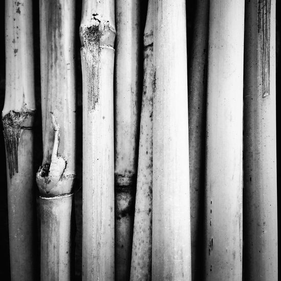 EyeEm Selects Bamboo Canes Abstract Vertical Lines Pattern Monochrome Black And White Square Format Lovers The Week On EyeEm