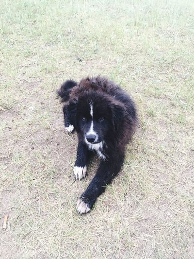 Mammal One Animal Vertebrate Domestic Animals Dog Canine Domestic Pets Day