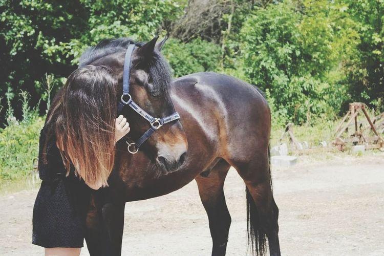Lexème D'Epinoux ?? Perfect I Love My Horse First Eyeem Photo