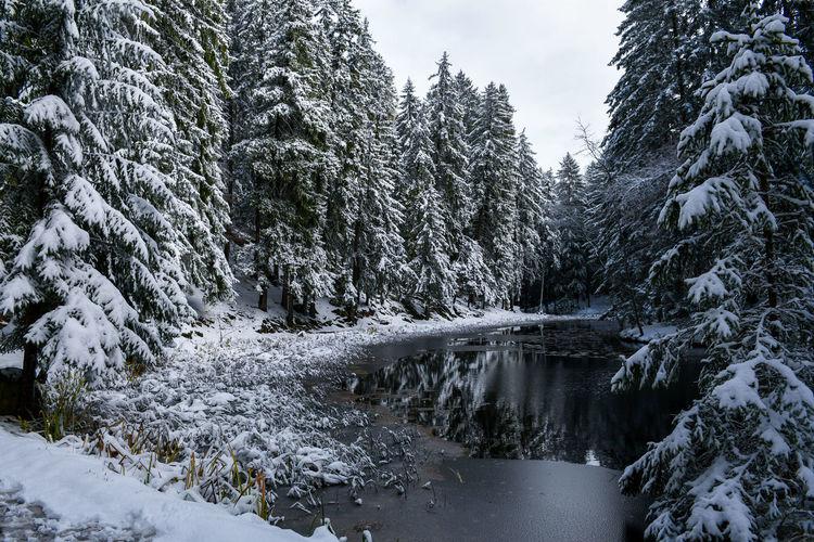 Snow ❄ Beauty
