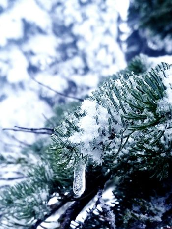 Winter Snow Tree Cold Temperature No People Close-up Nature Day Beauty In Nature Outdoors Nature Treethugger Tree Naturerocks Naturerox Nature_collection Landscape_collection EyeEmNatureLover Plant Icicle Pine Tree