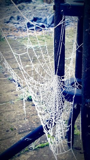 Webseries Web Frozen Nature Beautifully Organized Beautiful Nature Close-up Spider Web Outdoors Frosty Mornings From My Point Of View Wintertime Spiderweb