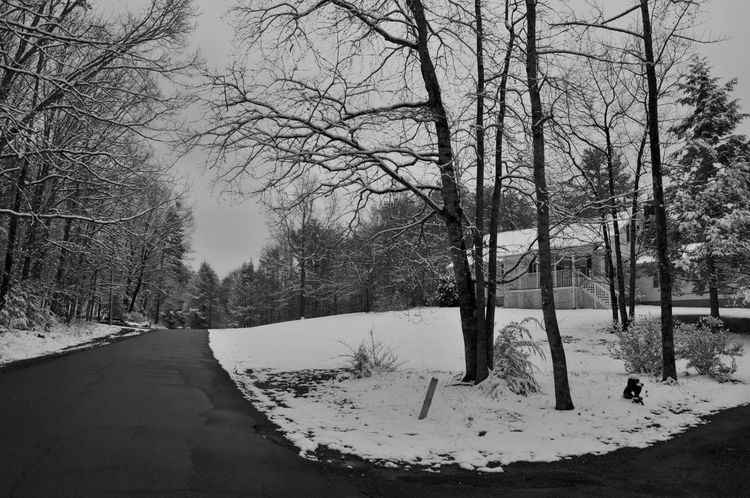 My Winter Favorites Snow Branch NATURE Blackandwhite Peace And Quiet