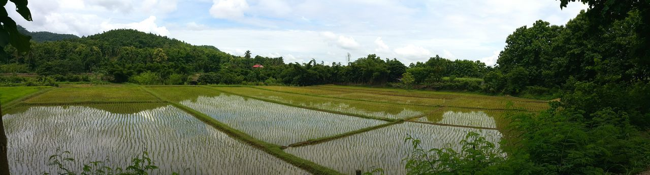 Agriculture Farm Growth Cloud - Sky Reflection Rice Field Field Crop  Nature Rural Scene Tree Landscape Rice Paddy Sky Outdoors No People Scenics Day Beauty In Nature