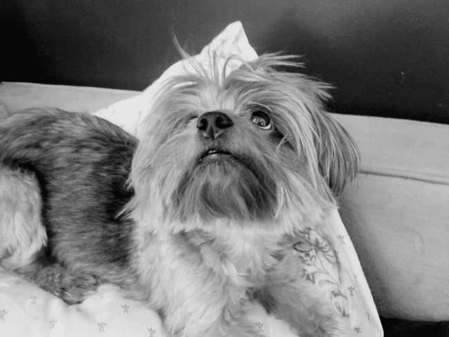 Adogslife Mydog♡ Monochrome Black And White
