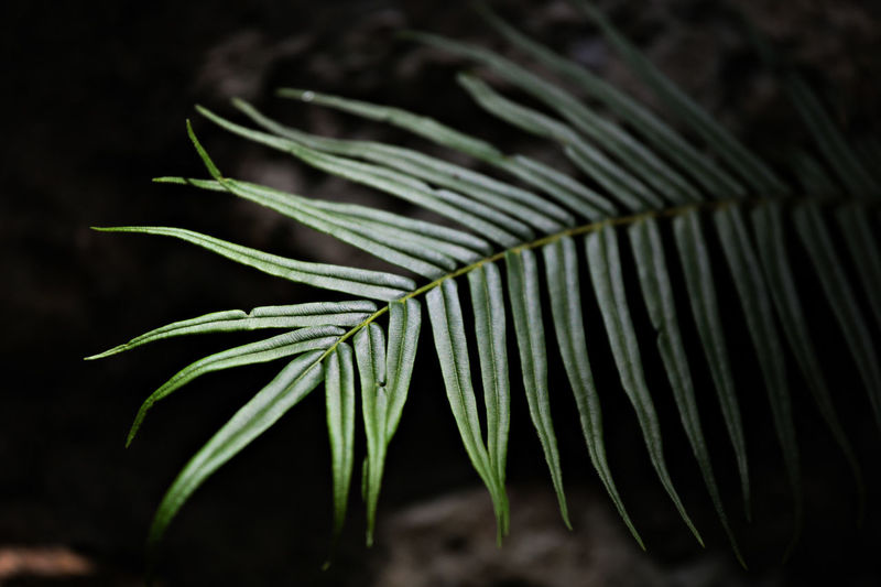 Tree Close-up Fern Forest Green Color Growth Leaf Nature