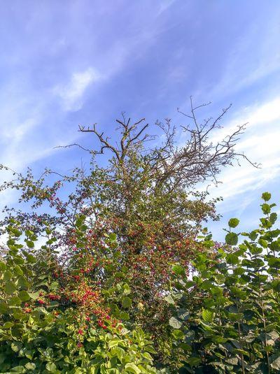 254/365 Baum