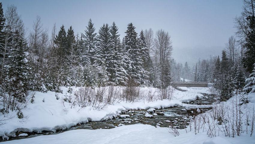 #beautifulbc #creekinw #fastmovingcr #landscape #nature #photography #lightlyfallingsnow #Nature  #nopeople #snowyday #supernaturalBC