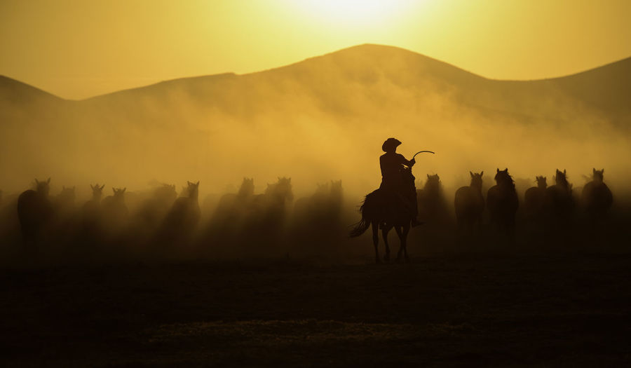 Mid adult man riding horse on field against sky during sunset
