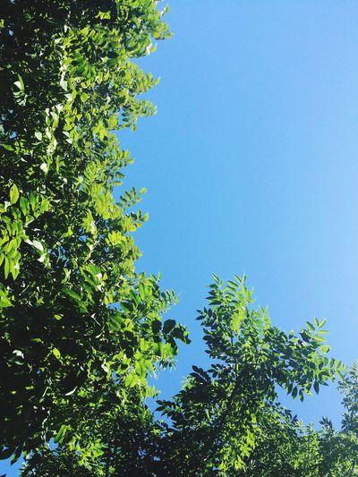 Beautiful Weather♡ Summer Days ☀️ Best Summer Photo