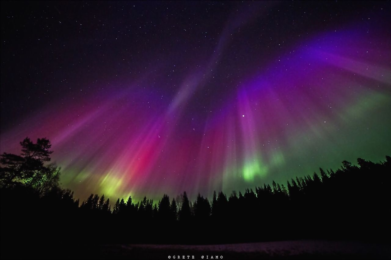 night, tree, beauty in nature, silhouette, star - space, nature, majestic, aurora polaris, astronomy, scenics, forest, no people, outdoors, pine tree, green color, space exploration, sky, space, multi colored, spruce tree, constellation, galaxy