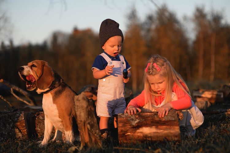Siblings playing with wood by dog on field against trees in forest during sunset