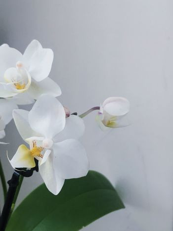 Flower Orchid Nature Plant Bloom