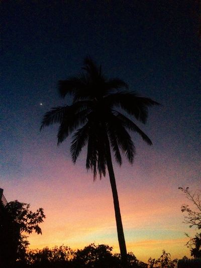 Palm Tree Silhouette Tree Nature Sky Beauty In Nature Scenics Tranquil Scene Tranquility Growth Low Angle View No People Outdoors Tropical Climate Tree Trunk Sunset Palm Frond Night