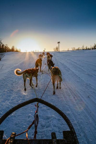 Ski Skiing Snow Sport Sweden Winter Winter Wonderland Wintertime Dog Q Quadruped 43 Golden Moments