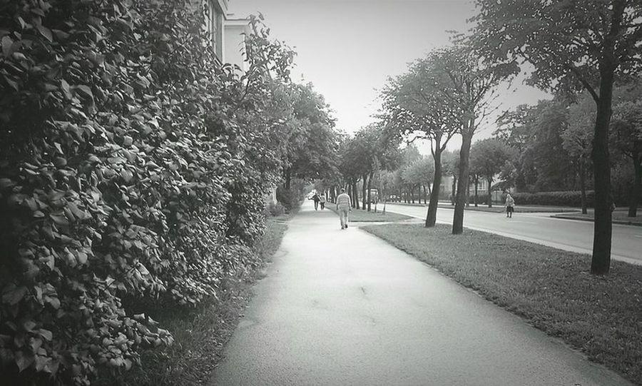чернобелоефото Black And White