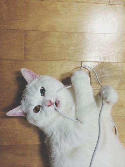 Cat Odd
