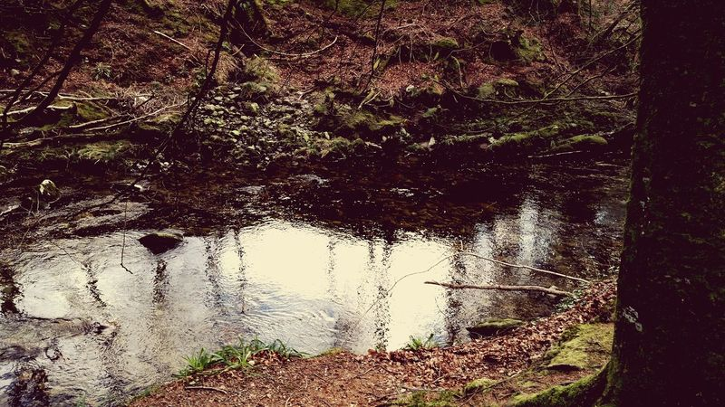 Northern Ireland Film Set Tollymore Forest Park Riverwalk Scenery Beauty In Ordinary Things Nature Photography Forest Water Tree Enjoying Life