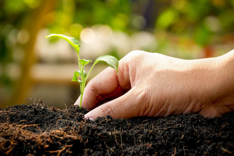 Human Hand Human Body Part Hand Real People One Person Plant Growth Unrecognizable Person Nature Lifestyles Body Part Selective Focus Holding Dirt Green Color Finger Day Focus On Foreground Plant Part Outdoors Gardening Human Limb Care Planting