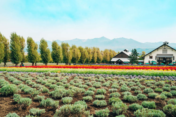 Plant Beauty In Nature Growth Tree Sky Nature Field Landscape Scenics - Nature Land Day Rural Scene Architecture House Environment Agriculture Green Color Built Structure Mountain Flower No People Outdoors Flowerbed