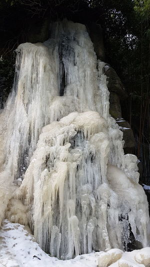 Frozen Waterfall .Diergaarde Blijdorp Outside Day Today ☺ Zoo