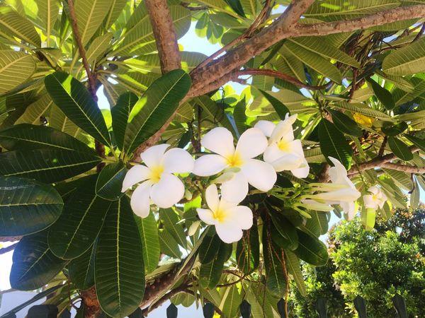 Flowers Summer White
