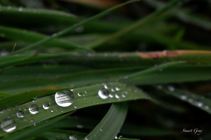 So fragile. Grass Beauty In Nature Close-up Day Drop Fragility Freshness Green Color Growth Leaf Nature No People Outdoors Plant Purity RainDrop Selective Focus Water Wet