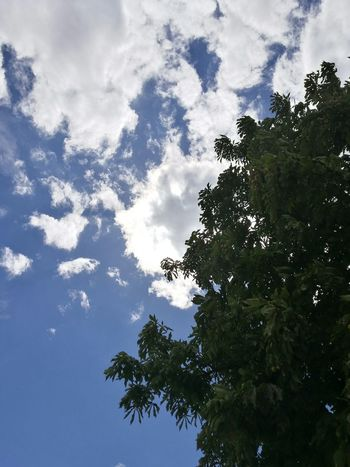 Nature Photography Sky Nature  Sky Tree Sky Clouds Blue Sky