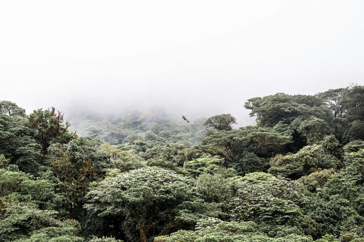 View Of Man Ziplining Above Forest