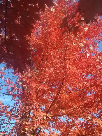 Fall Leaves No Filter Fall_collection EyeEm Nature Lover