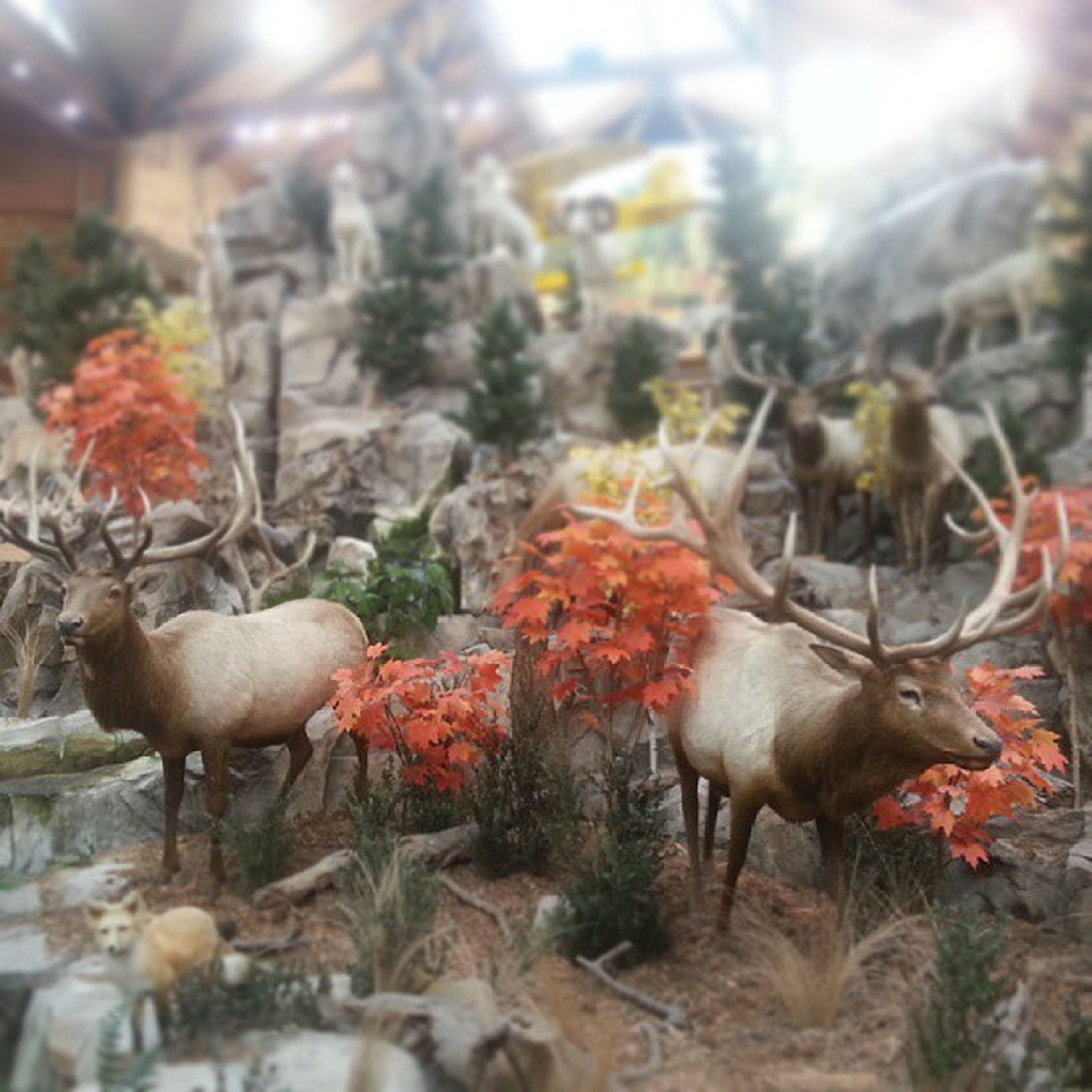 animal themes, livestock, bird, food and drink, animals in the wild, domestic animals, food, medium group of animals, chicken - bird, focus on foreground, selective focus, close-up, wildlife, field, indoors, day, nature, no people, animals in captivity