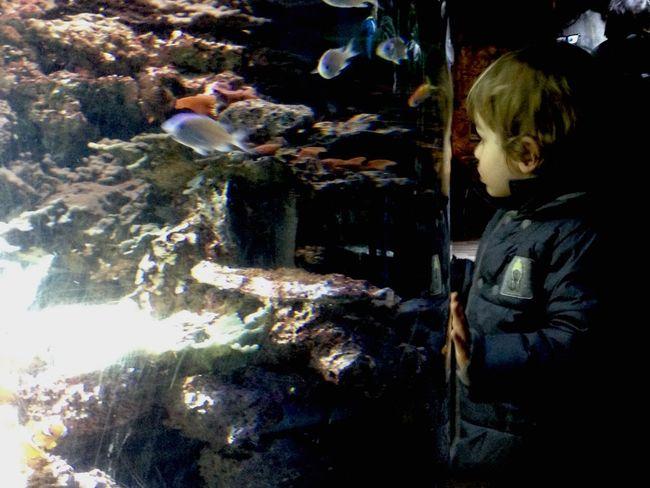 Sealifeaquarium Sealife Kids