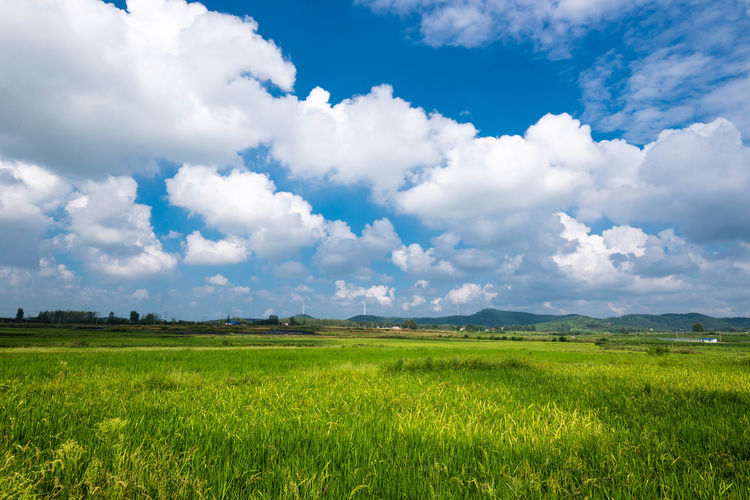 Paddy Field And Summer Sky Beauty In Nature Chinese Cloud - Sky Environment Field Green Color Landscape Paddy Field Rural Scene Sky Tranquil Scene Tranquility