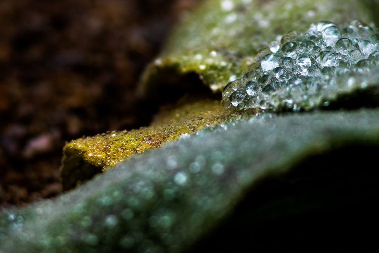 Beauty In Nature Black Background Close-up Cold Temperature Crystal Drop Extreme Close-up Freshness Green Color Growth Macro Nature No People Outdoors Plant Purity Selective Focus Shiny Water Wet