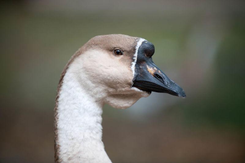 Close up of bird head