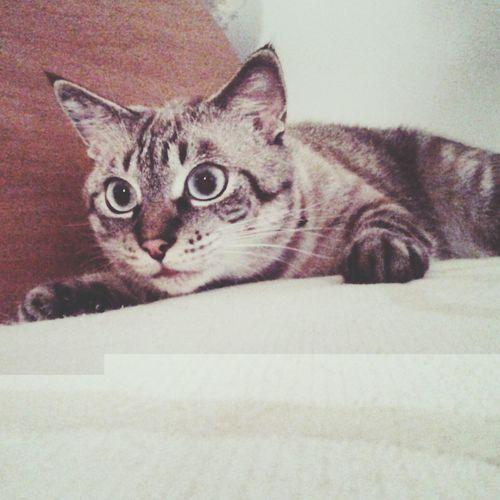 Cat Lovers I Love My Cat ❤ tigre !?