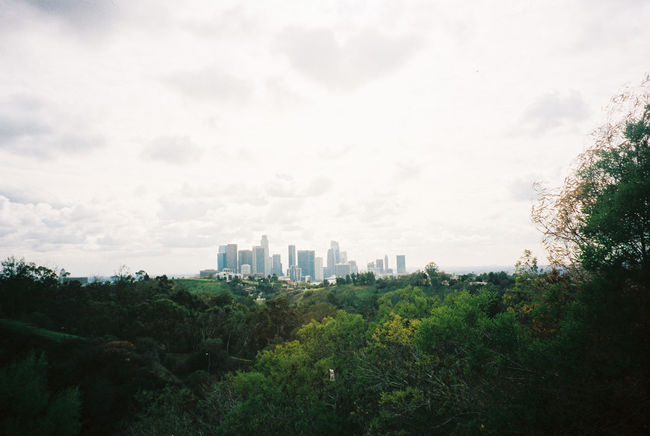35mm Film Analogue Photography City City Center Cityline Cityscape Day Downtown Los Angeles Elysian Park Film Film Photography Film Photography Never Die Kids Los Ángeles Nature Outdoors Sky Skyscrapers Tree View