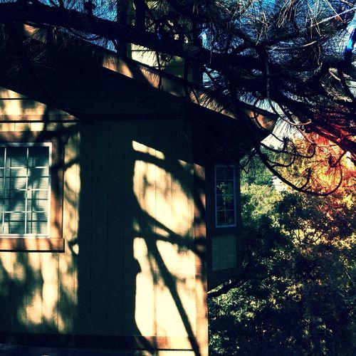 Grampa's Cabin