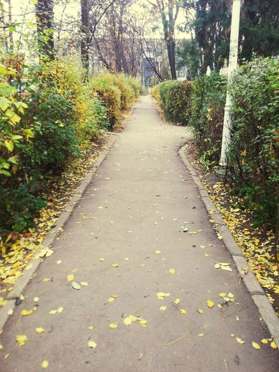 Outdoors Outdoor Photography Relaxing Walking Around Autumn November