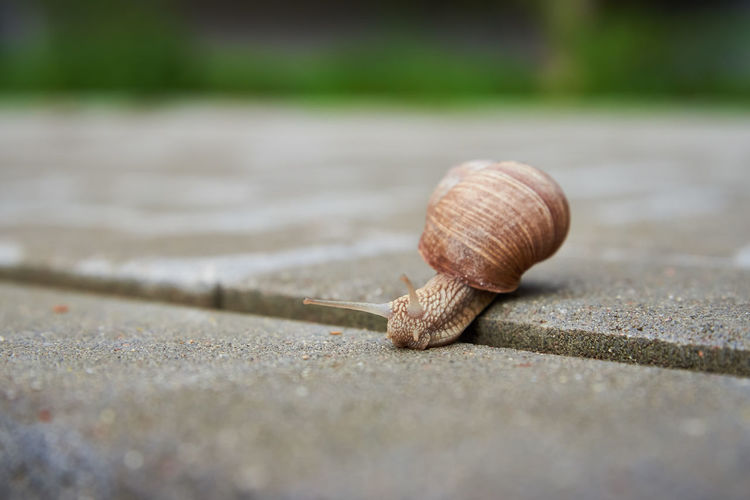 Close-up of snail on road