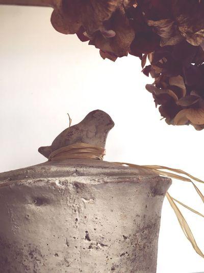 Fleurs Seche Fleurs Interrieur Flowers Oiseau Matbre Pierre Sculpture
