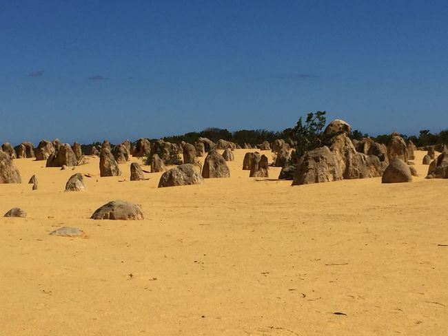 Pinnacles National Park in early afternoon Natural Monument Australia National Park Nambung-Nationalpark Nature Desert Wüste  The Great Outdoors With Adobe Traveling