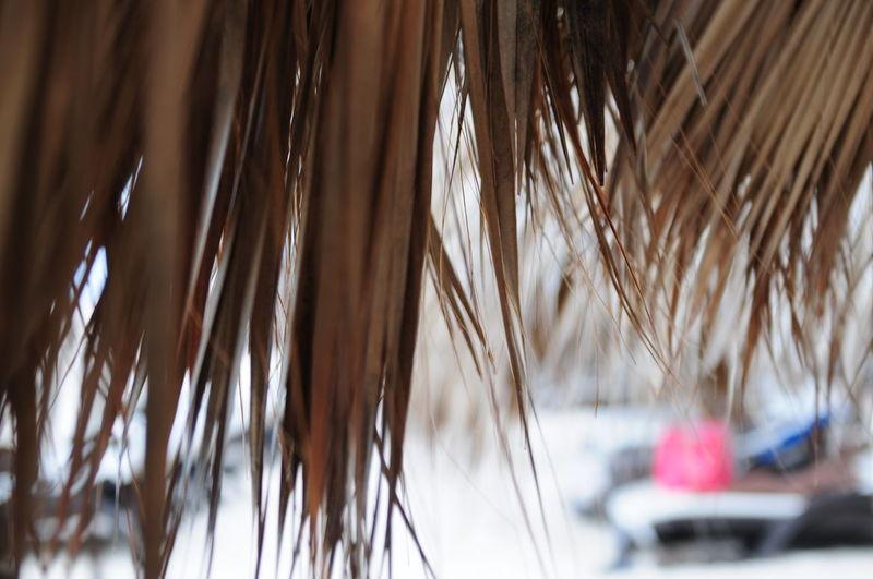 EyeEm Masterclass EyeEmbestshots Eyeem Market EyeEm Best Shots - Nature Eyeemphotography EyeEm Gallery EyeEm Close-ups EyeEm Selects EyeEm Nature Lover EyeEm Best Shots Eyeem Still Life Summer Beach Eye Em Around The World Eye Em Collection Eye Em Travel Punta Cana, Dominican Republic Best EyeEm Shot Best Of EyeEm Best Time Of My Life Bestphoto Bestnatureshot Bestsellers Bestofinstagram