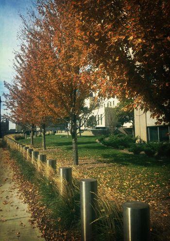 Fall is fast approaching... Colors Of Autumn Urban Landscape EyeEm Best Shots - Landscape EyeEm Best Shots - Trees