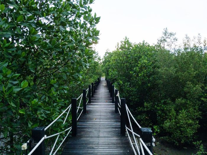 Boardwalk amidst plants and trees