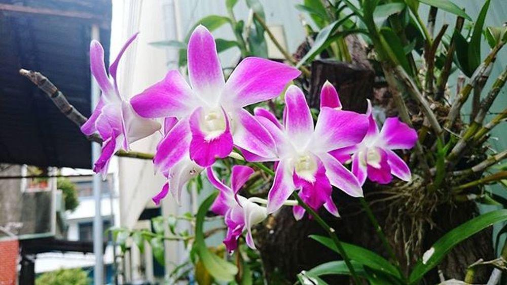 Chả biết từ khi nào nữa, thấy yêu loài hoa này 😊 Phonglan Hoa Flowers Taiwan Kaohsiung