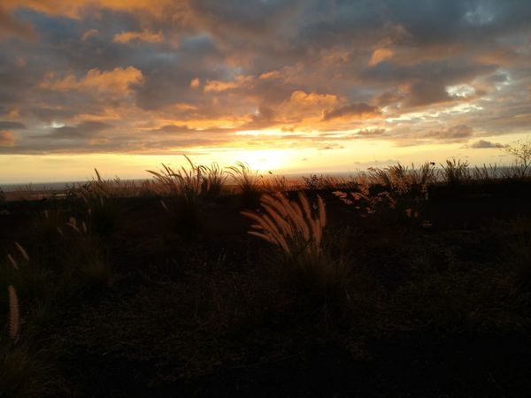 Looking out towards the ocean, a beautiful Kona, Hawaii sunset. Water Sunset Tree Sea Silhouette Beach Dramatic Sky Sky Horizon Over Water Landscape Reed - Grass Family Romantic Sky Moody Sky Seascape Coast Atmospheric Mood
